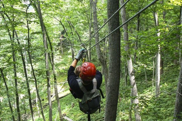 A person ziplining between the tall trees of a forest