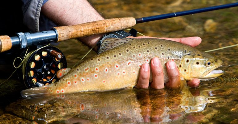 Things to do in around harman 39 s luxury lob cabins west for Virginia fish hatchery